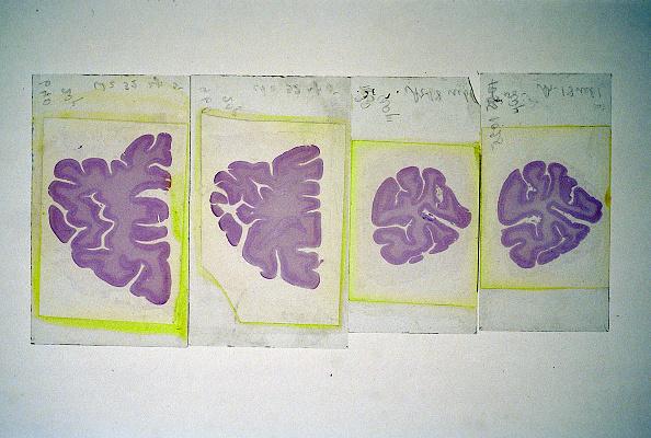 Wojtek Laski「The Moscow Brain Institute」:写真・画像(18)[壁紙.com]