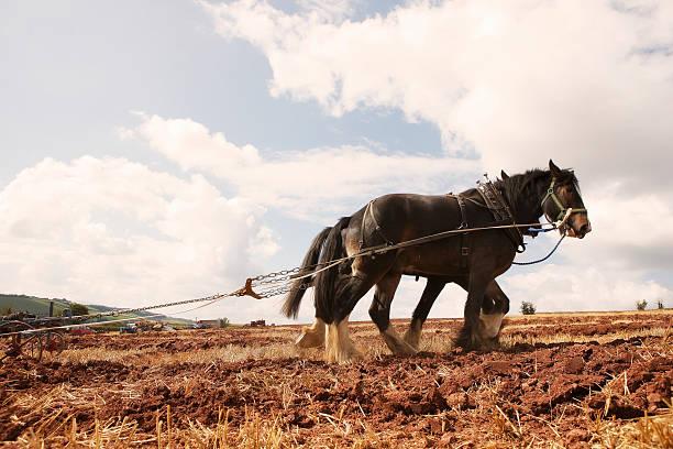 two heavy horses pulling plough:スマホ壁紙(壁紙.com)