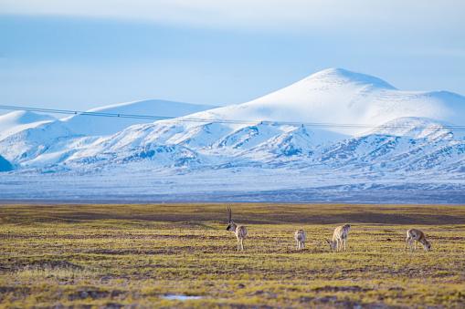 雲「雪山近く動物と貼り付ける」:スマホ壁紙(19)