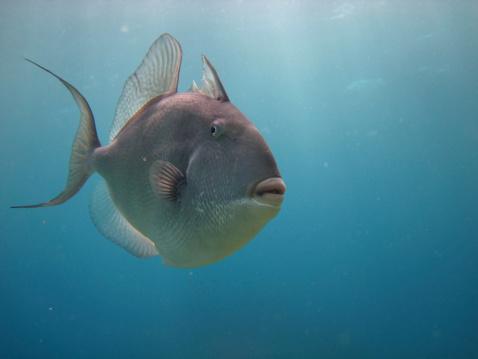 Queensland「jasmine fish」:スマホ壁紙(12)