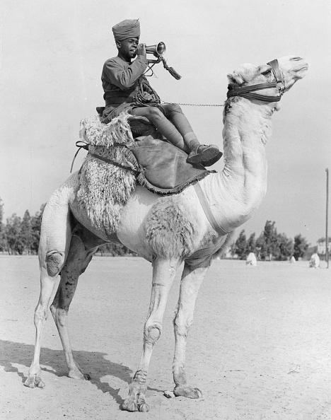 Working Animal「Camel Corps Bugler」:写真・画像(9)[壁紙.com]