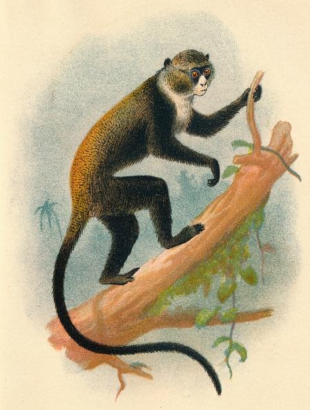 Animal Body Part「BoutourliniS Gernon」:写真・画像(13)[壁紙.com]
