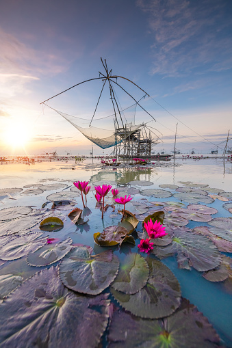 Water Lily「the fisherman village catching fish with net and yokyor Pakpra Pattalung Thailand」:スマホ壁紙(13)