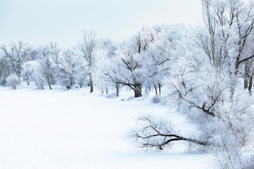 雪景色「自然 Hoar フロスト森林の冬景色、木々に潜む凍った湖」:スマホ壁紙(19)