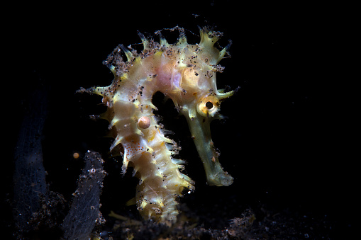 Sea Horse「Seahorse reef」:スマホ壁紙(15)