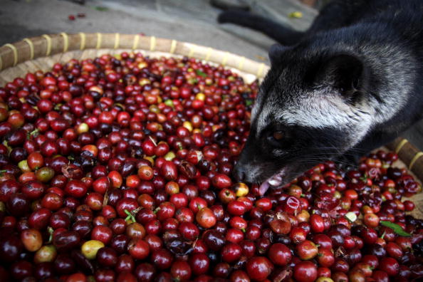 Empty「Production Of The World's Most Expensive Coffee Thrives In Indonesia」:写真・画像(3)[壁紙.com]