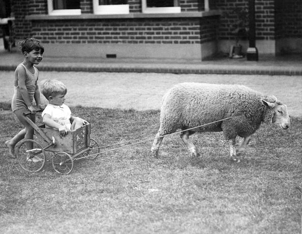 Domestic Animals「Drawn By Lamb」:写真・画像(19)[壁紙.com]