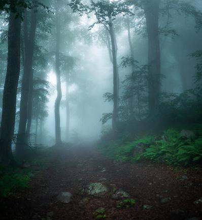 Rain「Misty wood」:スマホ壁紙(10)
