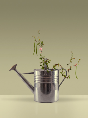 Organic「Bean plant growing around a watering can」:スマホ壁紙(2)