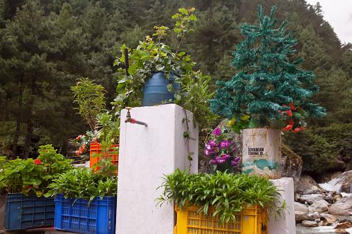 Khumbu「Collection of plants, Phakding, Nepal」:スマホ壁紙(10)