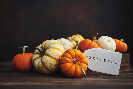Miniature Pumpkin「Collection of miniature pumpkins in wooden crate with GRATEFUL message for Fall and Thanksgiving」:スマホ壁紙(0)