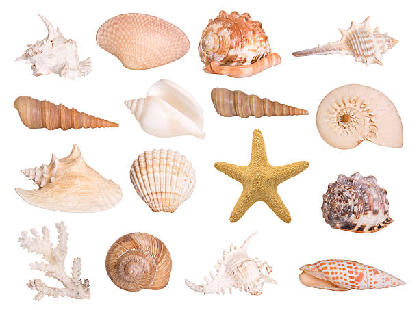 Collection of isolated seashells:スマホ壁紙(壁紙.com)