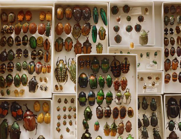 A collection of beetles:スマホ壁紙(壁紙.com)