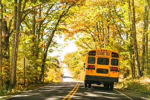 Bus「yellow school bus rear view on the road」:スマホ壁紙(3)