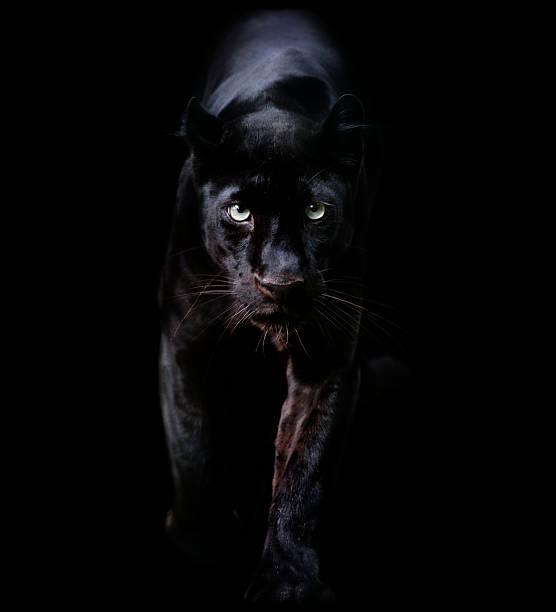 black panther:スマホ壁紙(壁紙.com)