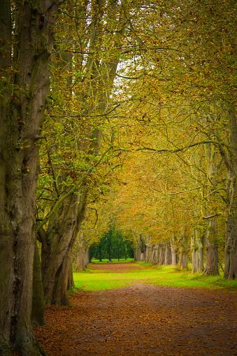 Chestnut Tree「Avenue through trees in a formal garden」:スマホ壁紙(17)