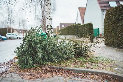 Pinaceae「Germany, Brandenburg, christmas tree is disposed」:スマホ壁紙(18)