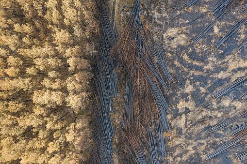 Deforestation「Germany, Brandenburg, Treuenbrietzen, Forest, Aerial view of slash and burn」:スマホ壁紙(17)