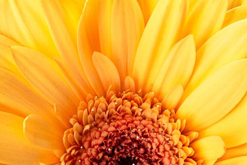 花「黄色のデイジー、クローズアップで、春の時間」:スマホ壁紙(18)