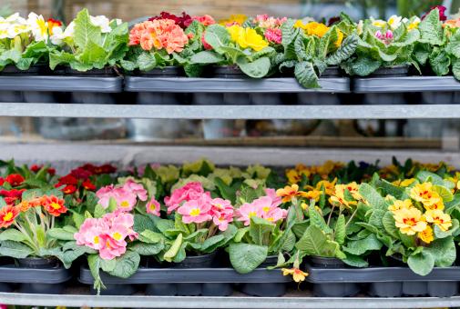 Market Stall「Pallets of primroses at market」:スマホ壁紙(10)