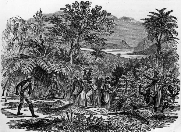 History「Coffee Harvest」:写真・画像(14)[壁紙.com]