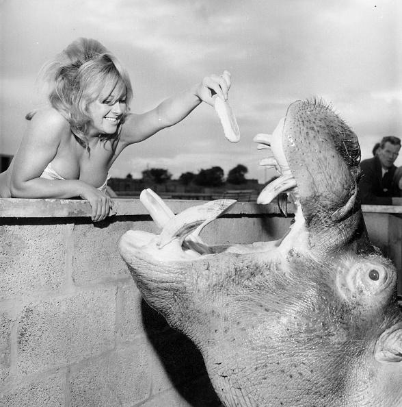 Bun - Bread「Harry Hippo」:写真・画像(19)[壁紙.com]