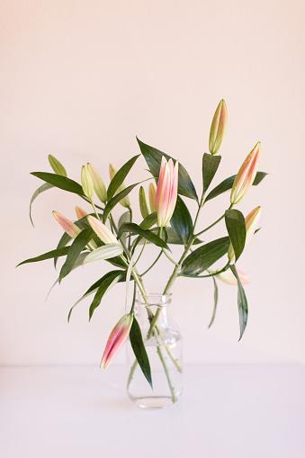 Blossom「Pink Easter Lilies」:スマホ壁紙(3)