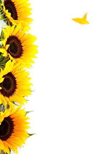 ひまわり「黄色 Sunflowers ホワイトの垂直にスタックド、コピースペース付き」:スマホ壁紙(5)