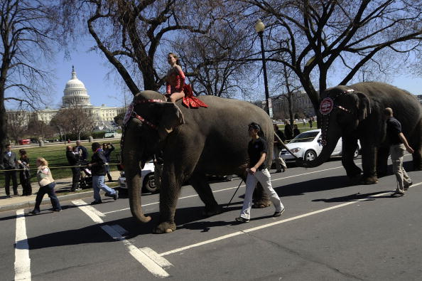 Ringling Brothers and Barnum & Bailey Circus「Ringling Brothers Parades Kicks Off Circus Coming To DC」:写真・画像(17)[壁紙.com]