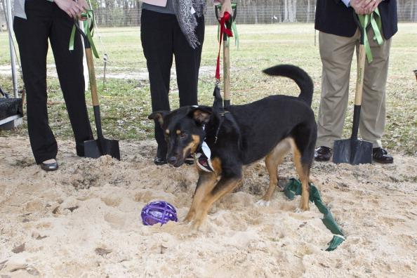 Alabaster「Beneful Kicks-Off Second $500,000 Dream Dog Park Renovation」:写真・画像(4)[壁紙.com]