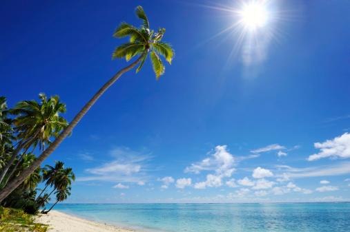 South Pacific Ocean「tropical dream beach」:スマホ壁紙(19)