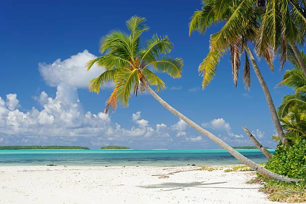 南国の夢のビーチ:スマホ壁紙(壁紙.com)