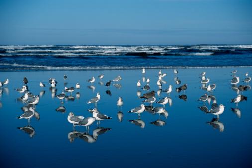 Ecola State Park「USA, Oregon, Ecola Creek, seagulls on Cannon Beach」:スマホ壁紙(8)