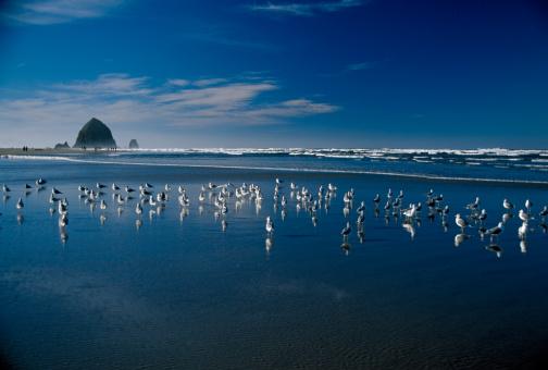 Haystack Rock「USA, Oregon, Ecola Creek, seagulls on Cannon Beach」:スマホ壁紙(16)