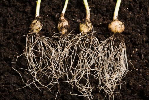 Plant Bulb「Plant roots」:スマホ壁紙(19)
