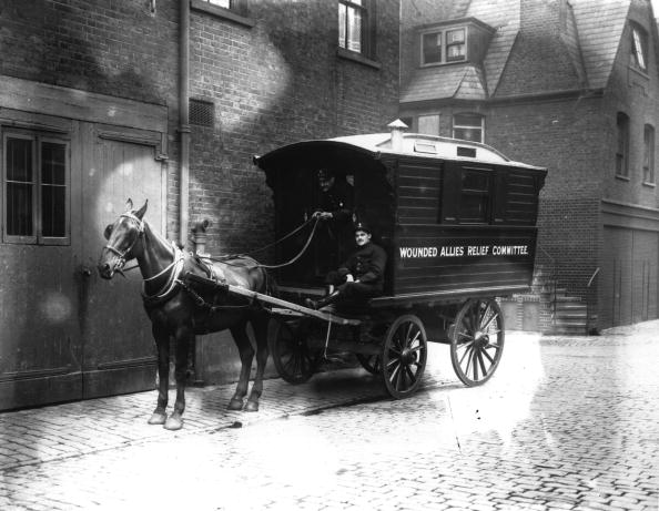 Horse「Army Ambulance」:写真・画像(5)[壁紙.com]