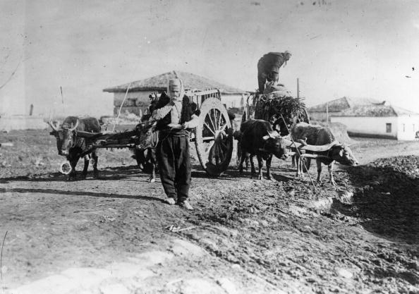 Working Animal「Albanian oxen」:写真・画像(7)[壁紙.com]