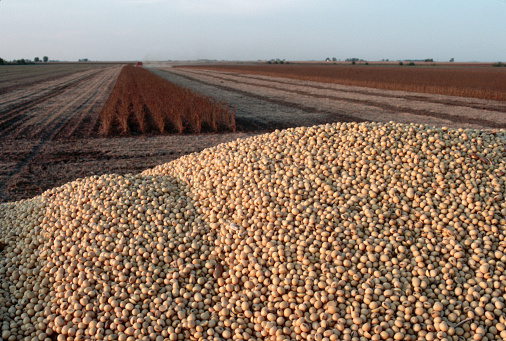 1980-1989「Mountain of Harvested Soybeans Above Fields」:スマホ壁紙(0)