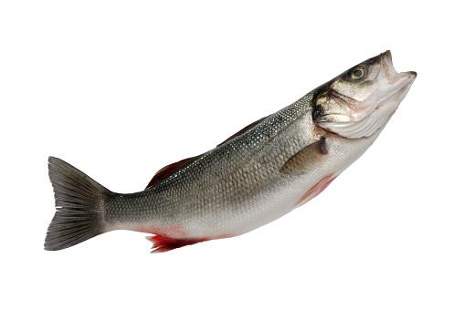 Fish「Sea Bass」:スマホ壁紙(9)
