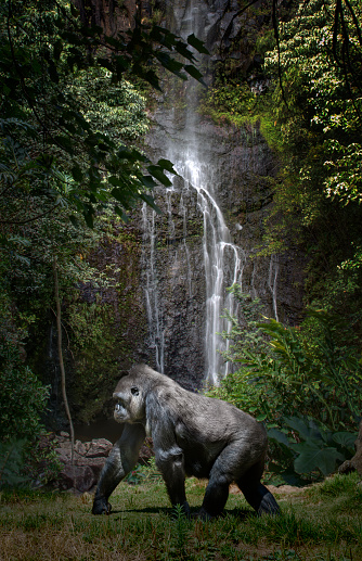 Walking「Female Gorilla in Naturalistic Setting」:スマホ壁紙(14)