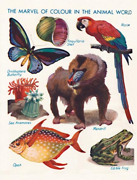 殻「The Marvel Of Colour In The Animal World」:写真・画像(15)[壁紙.com]