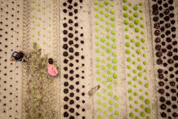 Organic Food Production Reaches Record Level:ニュース(壁紙.com)