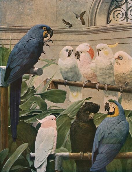 Animal Themes「A Select Committee」:写真・画像(3)[壁紙.com]