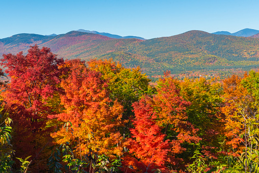 Deciduous tree「Indian Summer in New Hampshire, USA」:スマホ壁紙(1)