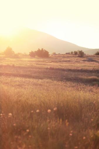 Pasture「Indian summer nature meadow」:スマホ壁紙(8)