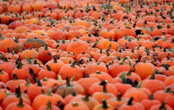 Gourd「Northeast And Midwest Face Halloween Pumpkin Shortage」:写真・画像(12)[壁紙.com]