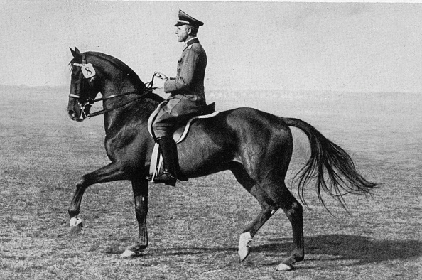 Working Animal「Olympic Horse」:写真・画像(19)[壁紙.com]