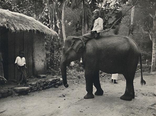 Sri Lanka「Elefant Auf Einem Wege Bei Kandy」:写真・画像(14)[壁紙.com]