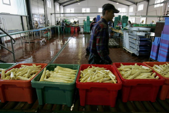 Asparagus「Asparagus Harvest Draws Seasonal Workers」:写真・画像(0)[壁紙.com]
