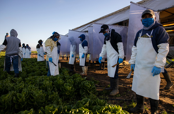 Romaine Lettuce「Immigrant Agricultural Workers Critical To U.S. Food Security Amid COVID-19 Outbreak」:写真・画像(10)[壁紙.com]